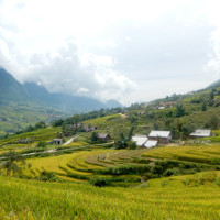 Rice fields in Sapa3 small